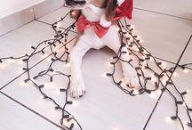 João Barone, o beagle