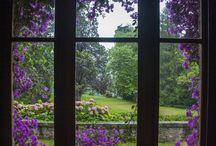 Beauty Through My Window...