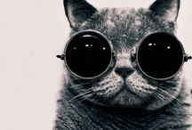 Kool Cats / Pictures that showcase the coolness that is the cat / by Fully Feline