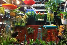 #nwfgs 2017 / The Northwest Flower and Garden Show