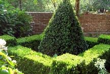 Manicured Hedge w Flowering Inside