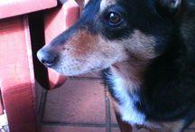 mijn hondjes