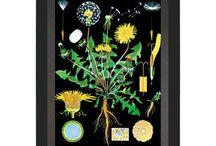 Botanical vintage prints