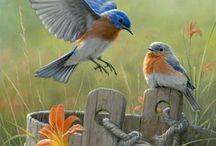 bluebirds / by Vicki Mince