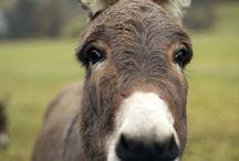 Donkeys ♥️