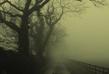 Foggy Days ♥