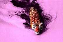 colour theory / by Samantha Jo Tobin