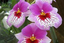 Orchideen / Orchideen, meine Lieblingsblumen