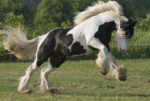 Horsin' Around / Everything horses! I Heart  horses!