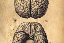 Anatomy Scientific drawings