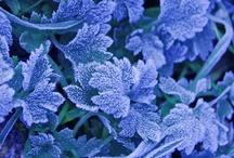 blue / by Catherine Díaz