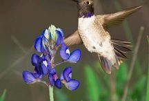 Texas Hill Country Nature Photos