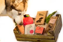 All About Maya / Our beloved Siberian Husky Maya: Chief Product Tester and the inspiration behind The Artisan Pet Deli.