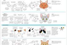 동물(고양이)