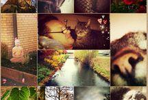 Meine Bilder