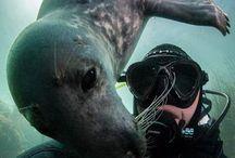 dykkerbilda