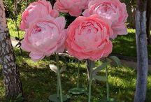 цветы гиганты