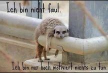 funny :) / by Vivi Klitzeklein