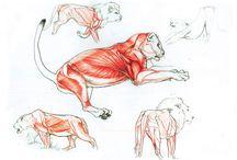 Anatomy / anatomy sketches