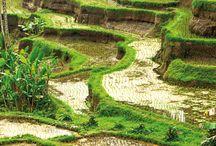 Bali - Travel