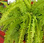 over wintering plants
