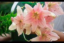 секреты огорода и цветов