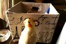 мой попугай Харри