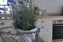Torp lavendel