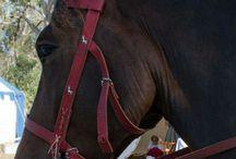 Medieval equestrian