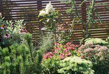 ogród w Koszalinie / ogród zaprojektowany przez Przedsiębiorstwo Romantycznych Zagajników