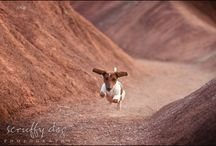 I love dachshunds! / by Becky Helzer