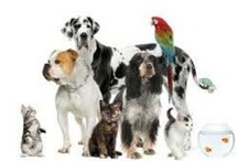 My Pet-Related Businesses / I have been an Entrpreneur in the pet care field for over 13 years! / by Robyn Stockwell