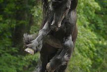 Horses,  Unicorns,  and Pegasus