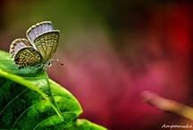 Naturaleza Animal / Seres vivos a los que debemos mucho y debemos cuidar con mimo y respeto.