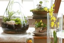 Terrarium, bonsai and indoor plant