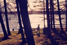 The Ideal Campsite