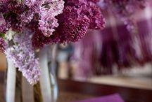 garden / by Jennifer Burns