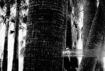 Anton Corbijn - Quentin Tarantino / Dutch Photographer
