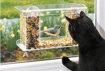 Garden:  For the Birds / Beautiful birds in the backyard.