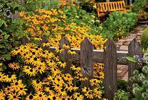 Flowers in the garden / by Lisa Pratt