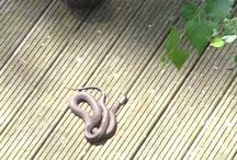 snakes / awesomeness