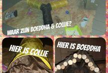 Boeddha en Collie / Mijn konijnen