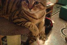 Storie di gatti / Fenomenologia della vita quotidiana quando in casa fanno irruzione due teneri micini destinati a diventare ben presto membri della famiglia e coprotagonisti delle sue avventure.