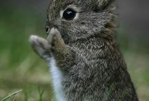 Cute little things / animals