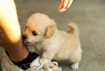 pups  / all my favorite pics of the adorable puppies