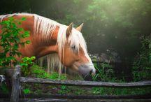 Die schönsten Pferdebilder