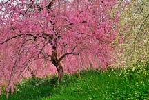 Spectacular Spring Scenes / by Cheryl Kelly