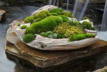 Moss Garden / by Elsa Garnica