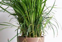 szobanövény-tartó