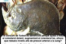 Turbot / Rodaballo / Aquí trobaràs curiositats sobre el turbot / Aquí encontrarás curiosidades sobre el rodaballo